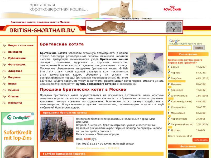 Клуб любителей кошек москва сайт ночной клуб тюмень бесплатный вход на